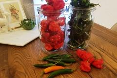 Chilis für die fruchtige Hot Sauce